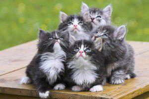 gatos-lindos-persa