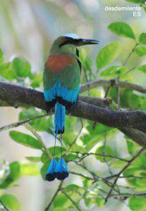 pajaros-aves
